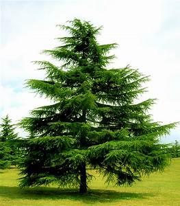 Dopo le feste: recuperare l'albero di Natale