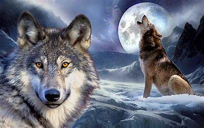 Wolf Wolves Grey Howling Species Code Cool