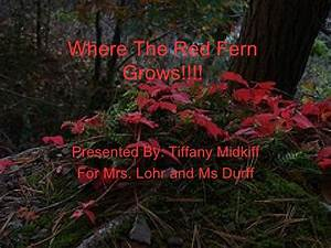 Where The Red Fern Grows!!!! 1