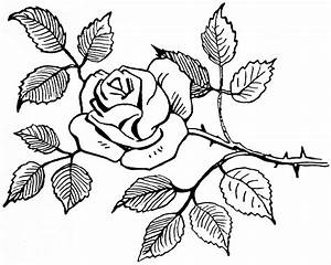 Simple Flower Drawings In Black And White Best 25+ Flower ...