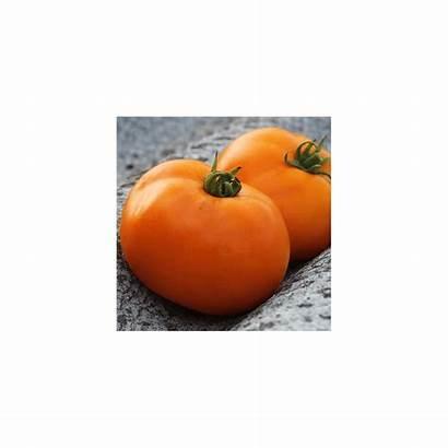 Valencia Orange Tomate