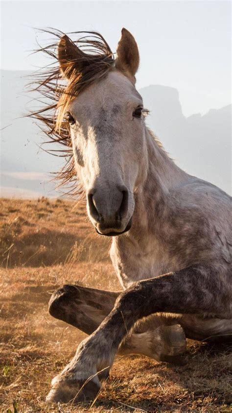 wallpaper horse sehlabathebe national park lesotho