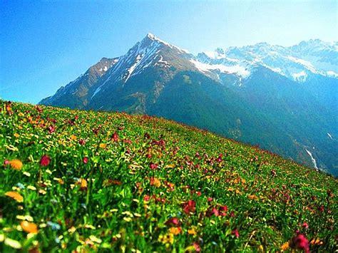 plants of mountains mountain plants
