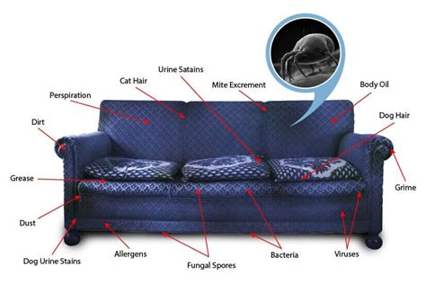 Upholstery Cleaning Nc by Upholstery Cleaning Services Jacksonville Nc Carolina