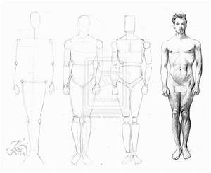 How to draw male figure by booode on DeviantArt
