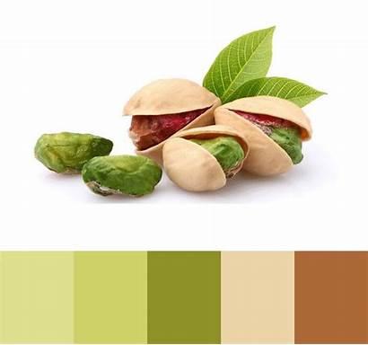Pistachio Palette Pistachios Colour Visit