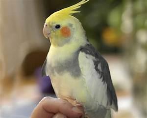 Papagei als Haustier ist das eine gute oder eher schlechte Idee?