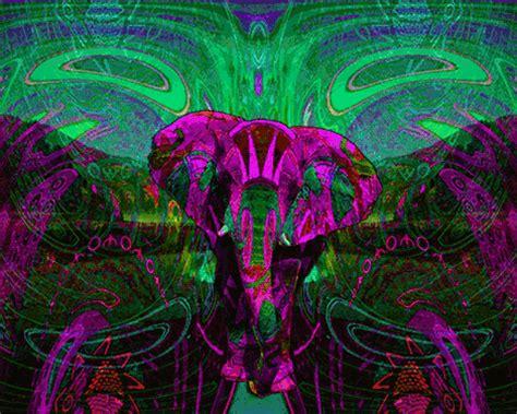 Trippy Animal Wallpaper - trippy animals on
