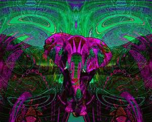 trippy elephant   Tumblr