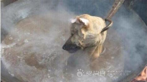 petition stop  yulin dog meat eating festival