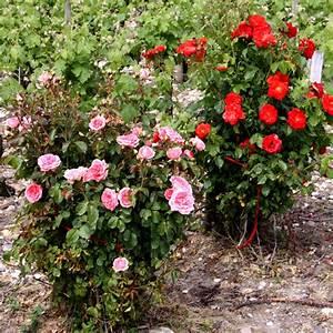 Traitement Contre L Oïdium : traiter l o dium jardinage ~ Dallasstarsshop.com Idées de Décoration
