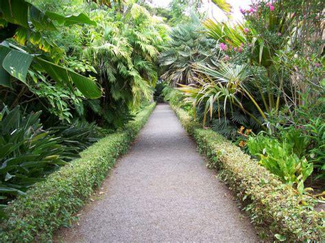 canarias en el siglo  jardin botanico del puerto de la
