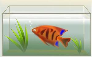 Volumen Aquarium Berechnen : aufgaben zum quader mathe themenordner ~ Themetempest.com Abrechnung