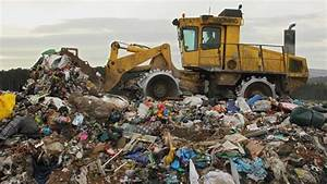 Millions of chickens go to landfill in UK each year ...
