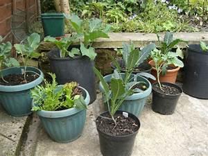 Urban Gardening Definition : greenhouses polytunnels impact living info training products services ~ Eleganceandgraceweddings.com Haus und Dekorationen