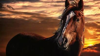Horse Paint Sunset Wallpapertag Powerful
