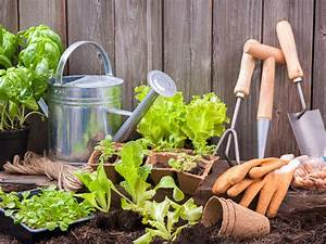 Gardening For Beginners  U2013 Starting A Garden At Home The