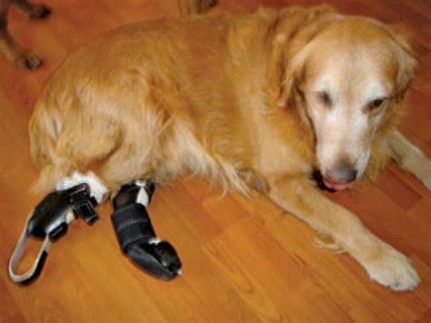 keeping   legged dog healthy  bark