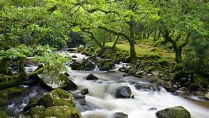 cherry brook river dartmoor national park forest in the