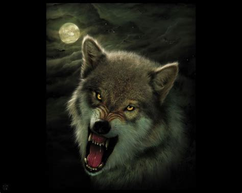 Angry Wolf Wallpaper Hd 1080p by Angry Wolf Wallpaper On Wallpaperget