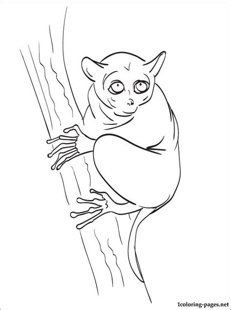 tarsier coloring page   coloring pages