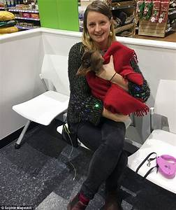 Daschund snatched from petrol station reunited with owner ...