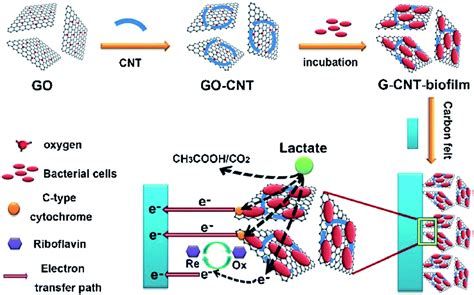 nanotechnology  rescue bacterial bidirectional extracellular electron transfer