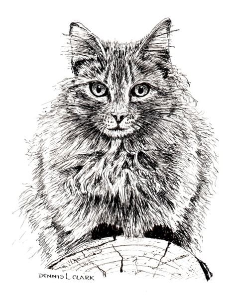 How To Draw A Cat On A Log In Pen And Ink — Online Art Lessons