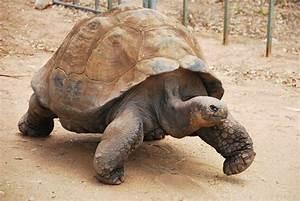Taronga Zoo Dubbo Video Endangered Species The Travel