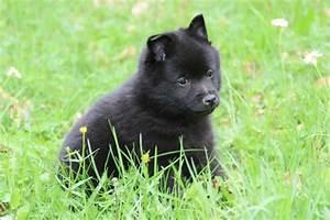 Anti Allergie Hund : grasmilben beim hund symptome und hilfe issn 39 r de ~ Orissabook.com Haus und Dekorationen