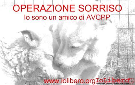 Porta Portese Cani Adozioni Di Cani Canili Di Roma Avcpp Iolibero