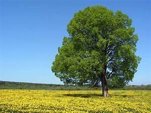Baum Mit H : einzelner baum an der fr hlings wiese stockbild bild von nicht umgebung 3787035 ~ A.2002-acura-tl-radio.info Haus und Dekorationen