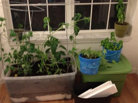 Best Images About Indoor Vegetable Garden On Pinterest