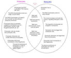 Prokaryotic And Eukaryotic Cells Worksheet - Sharebrowse