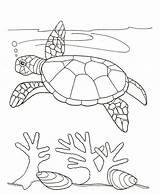 Coloring Turtle Pages Seaweed Drawing Algae Swim Swimming Sea Beach Adult Skyhawk Template Sketch Printable Getdrawings Scenes Coloringkids Near sketch template