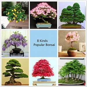 Bonsai Baum Arten : online kaufen gro handel kleine bonsai baum aus china ~ Michelbontemps.com Haus und Dekorationen