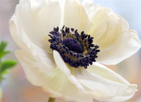 let s learn about flowers anemone edition planning it all