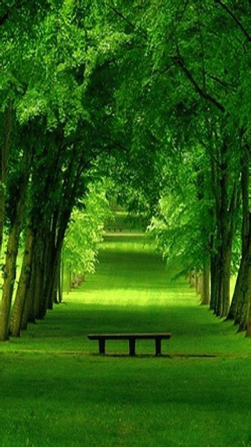 Nature Wallpapers For Mobile  Free Nature Wallpapers For