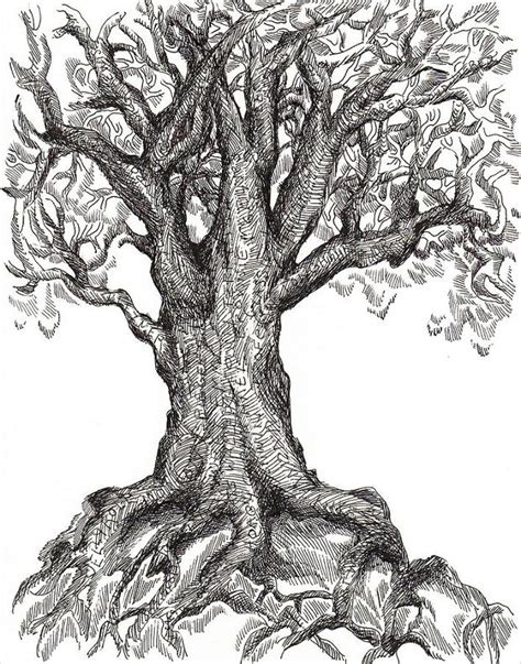 apple tree with roots drawing 25 tree drawings ideas design trends premium psd