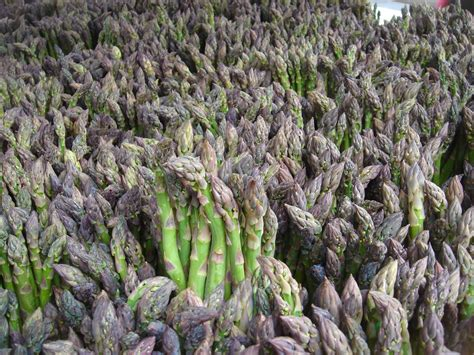 growing asparagus how to grow asparagus from seed indoors the garden of eaden