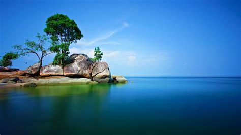 rock trees sea nature  landscape wallpapers hd