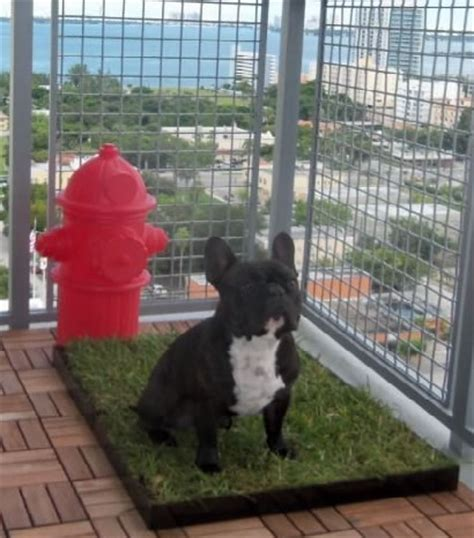 pet patio pet waste clean up service for high rises and