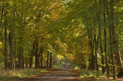 Savernake Forest   Forestry England