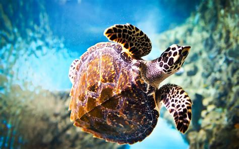 Sea Turtle Animated Wallpaper - animated sea turtle wallpaper iphone wallpapersafari