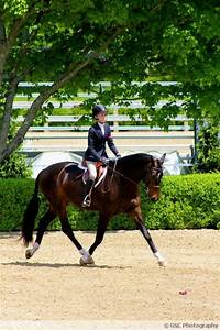 5071 best images about Horses on Pinterest