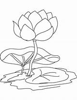 Lily Coloring Pad Water Flower Pages Drawing Flowers Printable Lilies Pads Print Sheets Line Stencil Adult Popular Getcolorings Recommended Getdrawings sketch template