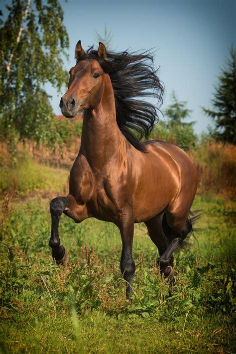 beautiful horse pferde  bewegung fotografen muenchen