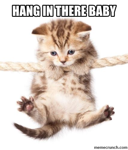 Hang In There Cat Meme - hang in there baby
