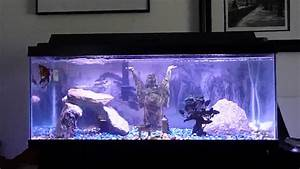 Idee Decoration Aquarium : zen aquarium youtube ~ Melissatoandfro.com Idées de Décoration