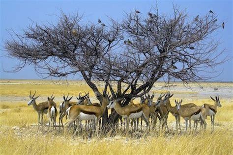 animals  namibia namibian animals namibia  kids